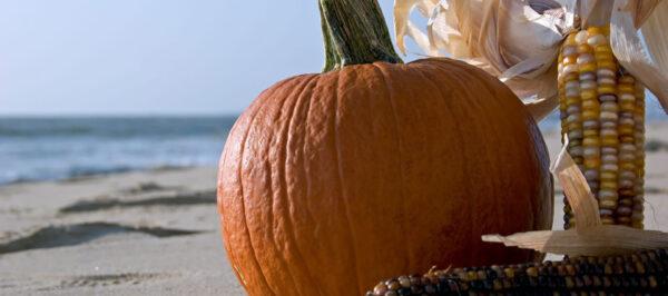 pumpkin on madeira beach
